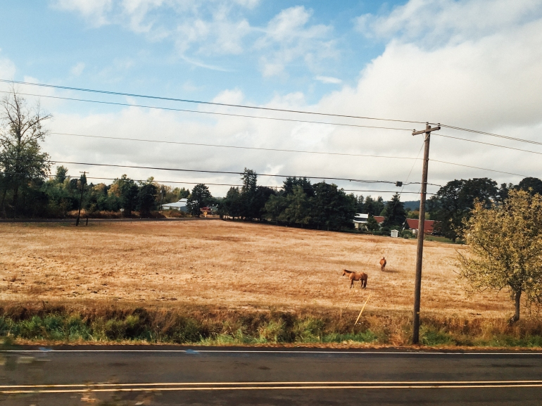 CoastStarlight-8.jpg